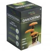 Nature Sure™ Ganoderma LingZhi Reishi Mushroom Capsules - for Stamina & Endurance - 1 Pack (60 Capsules)