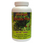 Tonga Herbs Ginkgo Biloba Plus Powder - 200Gm (Buy Any Supplement Get The Same 60ml drops Free)